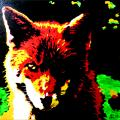 <br>Subject title: Fox<br/>Status: Available<br>